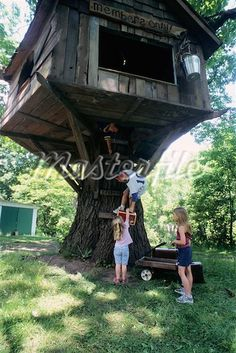 tree house on stump