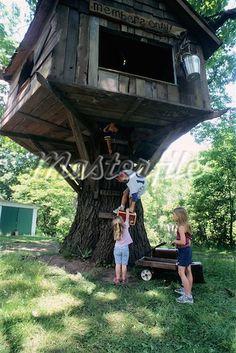tree house on stump