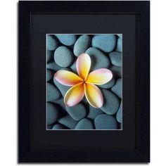 Trademark Fine Art Plumeria and Pebbles 5 inch Canvas Art by David Evans, Black Matte, Black Frame, Size: 16 x 20, Multicolor