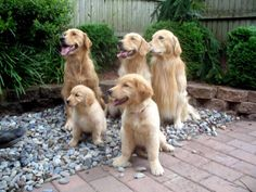Murray, Millie, Nifty, Olive and Polly...what a gorgeous family!