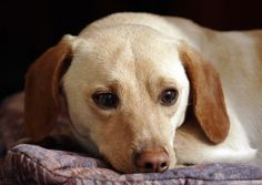 Crate training and housebreaking a 6-month-old dog takes a little more time and patience, but it can be done. Older pups may have developed bad habits or experienced trauma. You must gain his trust. Once he is calm, training is easier.