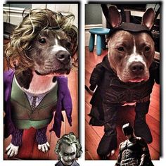 Pibbles are awesome at dressing up. Paws And Claws, Pit Bulls, Dog Days, Dog Lovers, Funny Pitbull, Paisley, Dress Up, Puppies, Pets