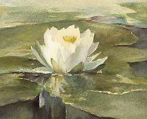 Waterlilly Kit by John LaFarge