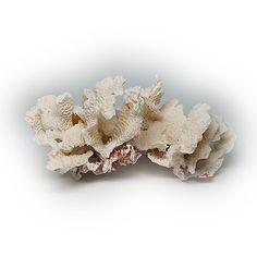 Lovely Large Leaf Letuce Coral Fossil Specimen by silvergoldbuyers