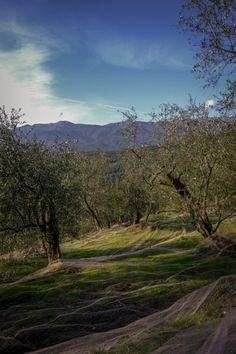 Passeggiata a Montegrazie