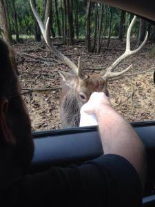 Lisa's review of Briarwood SafariPark in East Tennessee. http://threeladiesandtheirbabies.wordpress.com. #tennessee #safaripark #animals #briarwoodsafaripark