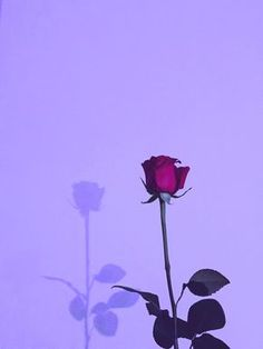 Wallpaper Backgrounds Aesthetic - PURPLE AESTHETIC /// neon aesthetic / purple aesthetic photography / aesthetic w. Dark Purple Aesthetic, Lavender Aesthetic, Violet Aesthetic, Simple Aesthetic, Rainbow Aesthetic, Aesthetic Colors, Aesthetic Vintage, Flower Aesthetic, Aesthetic Grunge