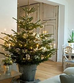 I love the idea of potting small live trees in containers to dot around the house. It would make every room feel festive and smell fresh. Take a look!