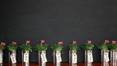 Des petites plantes en boites de conserves