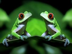 Image detail for -Washington, Mar 20 : Scientists have turned to fish and frogs to better understand the normal inner ear development in humans. Andres Collazo at the House Ear ...