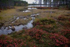 Urho Kekkosen kansallispuisto on vuonna 1983 perustettu, Savukosken, Sodankylän ja Inarin kuntien alueella sijaitseva kansallispuisto. Puiston pinta-ala on 2 550 neliökilometriä, ja se on Suomen toiseksi suurin kansallispuisto. Sen pohjoisen osan halki virtaa Suomujoki. Finland, Country Roads, Plants, Planters, Plant, Planting
