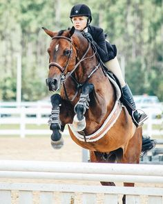 Florida equine photographer, Nicole Schultz, capturing the relationship between people and their horses. Pretty Horses, Horse Love, Horse Girl, Beautiful Horses, Equestrian Boots, Equestrian Outfits, English Riding, Jacksonville Florida, Show Jumping