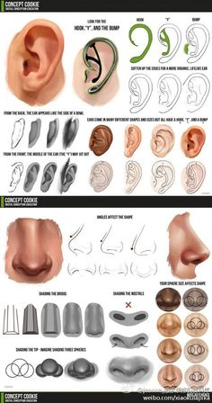 Drawing Heads, Body Drawing, Anatomy Drawing, Art Drawings, Figure Painting, Figure Drawing, Drawing Reference, Shading Faces, How To Draw Ears