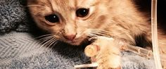 Elsa The Kitten Saved From Severe Hypothermia, And Given A Fairy-Tale Ending