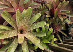 Fortnam Gardens: Love Those Bromeliads