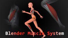 Blender 2.71 Muscle System [German]