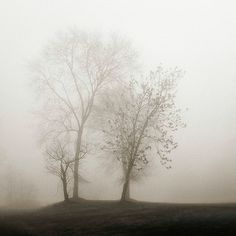 Printfinders Four Trees in Fog by Nicholas Bell on Canvas