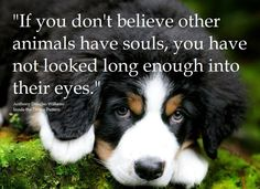 """""""If you don't believe other animals have souls, you have not looked long enough into their eyes."""" ~ A.D. Williams"""