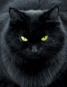 magical black cat