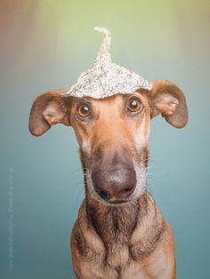 The future is now. by Elke Vogelsang - Photo 125982249 - Cute Funny Animals, Funny Animal Pictures, Funny Dogs, Very Cute Dogs, Goofy Dog, Mundo Animal, Crazy Dog, Dog Portraits, Beautiful Dogs