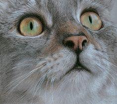 Tabby Cat by Katrina Ann.  Colored pencils.