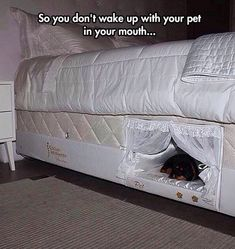 Funny pictures about Bed With A Place For Your Dog. Oh, and cool pics about Bed With A Place For Your Dog. Also, Bed With A Place For Your Dog photos. My New Room, My Room, Built In Dog Bed, Wake Up With You, Funny Animals, Cute Animals, Pet Beds, Doggie Beds, Bunk Beds