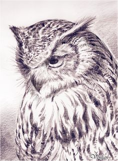 Owl by Venlian.deviantart.com on @DeviantArt