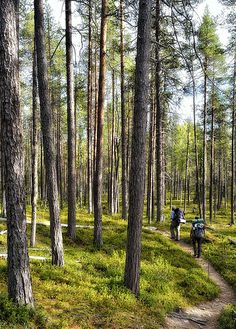 Hiking the Karhunkierros trails, Oulanka National Park, Finland
