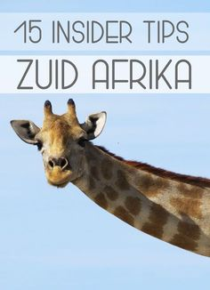 15 Insider tips voor Zuid-Afrika - Hip on Trip Uganda, Places To Travel, Places To Go, South Afrika, Africa Destinations, Namibia, African Animals, Future Travel, Africa Travel