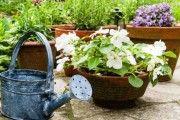 ΚΑΤΑΠΛΗΚΤΙΚΟ ΚΟΛΠΟ! Δοκιμάστε το και δείτε τα φυτά σας να μεγαλώνουν στο άψε- σβήσε!!! Garden Works, Tower Garden, Urban Farming, Diy Flowers, Mykonos, Agriculture, Watering Can, Kai, Planter Pots