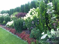 Hydrangea Paniculata, Garden Landscaping, Shrubs, Gardens, Landscape, Google, Plants, Ideas, Drawing Drawing