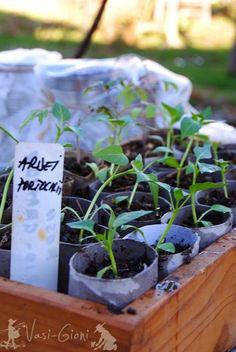 La ce Adâncime Semănăm şi Plantăm? - magazinul de acasă Spring, Gardening, Plant, Lawn And Garden, Horticulture