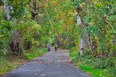 Riding Bikes through Bidwell Park, Chico, California with Ali Navarro is one of my favorite past times while I was in college.