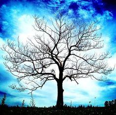Trees, trees, trees <3