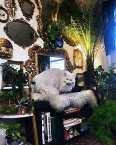 This cat is a very gorgeous pet #Animals #Green #Plants #Flowers #Interior