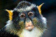 monkey desktop wallpaper | Cute Monkey - monkey, picture, cute, cool