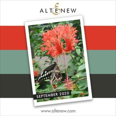 Get Inspired and Win Prizes! September 2020 Inspiration Challenge: Butterfly Garden - Altenew Blog