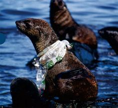 These Photos Showing the Animal Victims of Our Trash Will Make You Drop Plastic Like a Bad Habit!