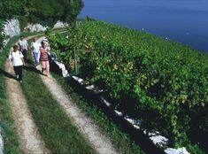 Une image de Die Twannbachschlucht Dolores Park, Images, Travel, Mont Blanc, Scenery, Viajes, Trips, Traveling, Tourism