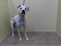 SAFE --- URGENT - Manhattan Center    BRIE - A0988818   FEMALE, WHITE / BLACK, PIT BULL MIX, 2 yrs  STRAY - STRAY WAIT, NO HOLD Reason OWN EVICT   Intake condition NONE Intake Date 01/04/2014, From NY 10001, DueOut Date 01/07/2014  https://www.facebook.com/photo.php?fbid=736865659659649&set=pb.152876678058553.-2207520000.1388963579.&type=3&theater