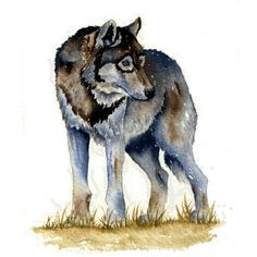 Watercolor sketch Grey Wolf by GillianMcMurray on Etsy Wolf Art ❤ liked on Polyvore featuring animals, art and filler