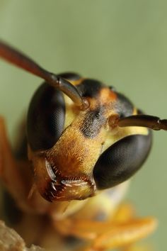 macro flash diffuser - Google Search