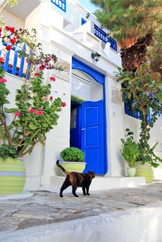 It's a Cat's Life - Amorgos, Greece