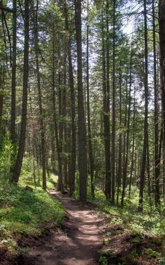 Wandering the trails in Cougar Bay Nature Preserve.- Best Hikes Near Spokane, Washington Washington Camping, Spokane Washington, Washington State, Best Places To Camp, Cool Places To Visit, Places To Travel, Forest Trail, Mount Rainier National Park, Evergreen State