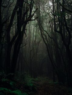 Forest Photography · Free Stock Photo Dark Green Aesthetic, Nature Aesthetic, Aesthetic Light, Theme Nature, Forest Background, Image Nature, Slytherin Aesthetic, Forest Photography, Wildlife Photography