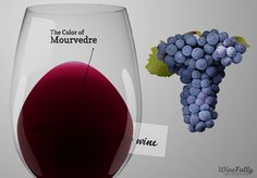 Mourvedre wine is a seemingly obscure grape used in some of the most famous red blends of the world. Find out more about how Mourvedre wine tastes and what foods to pair with it.