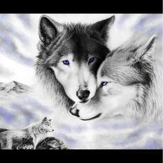 7 Pics Of Wolves(: Please Bid(: Thanks