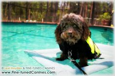 FINE-TUNED CANINES - Florida dog training blog - Southwest Florida Professional dog training & dog behavior counseling services in Naples, FL and Fort Myers, FL areas