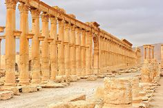 312 Palmyra (Syria)