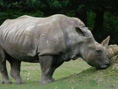 Kishanpur Wildlife Sanctuary - in Uttar Pradesh